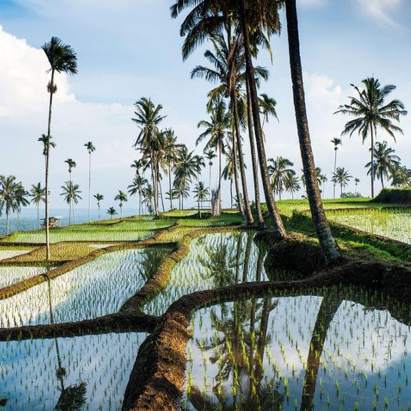 Java, Bali et Lombok   1570€     18 jours