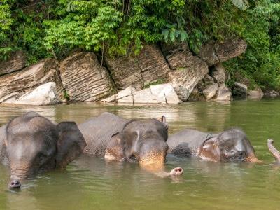Jour2-decouverte-de-sumatra
