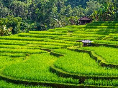 Jour4-voyage-de-luxe-bali-et-les-plages-de-lombok