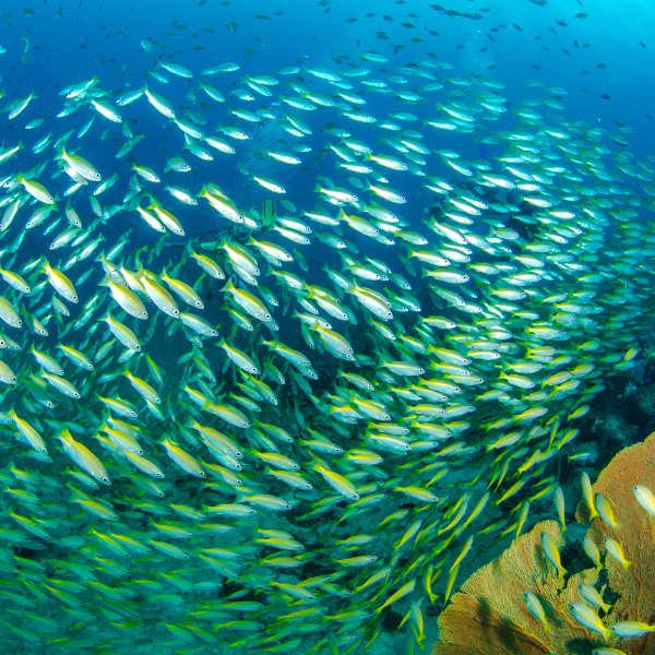 Safari plongée à Bali  1380€    12 jours