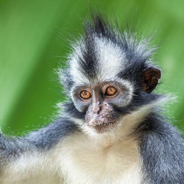 Où et comment découvrir la jungle de Sumatra ?