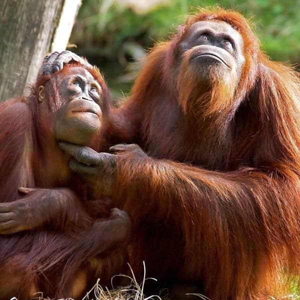 Les 6 lieux incontournables d'un voyage à Sumatra