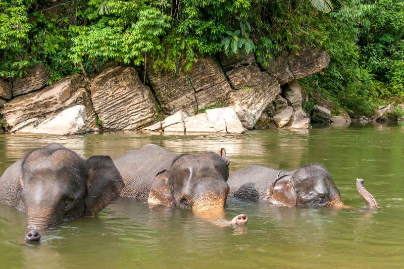 voyage-sur-mesure-sumatra