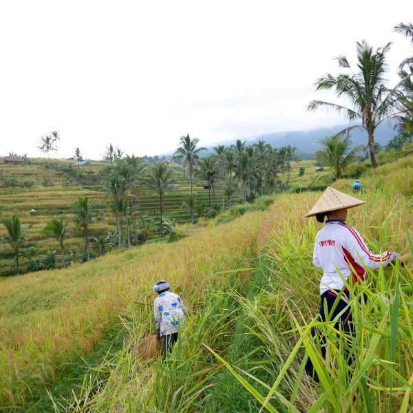 Visitez Bali en 2 semaines